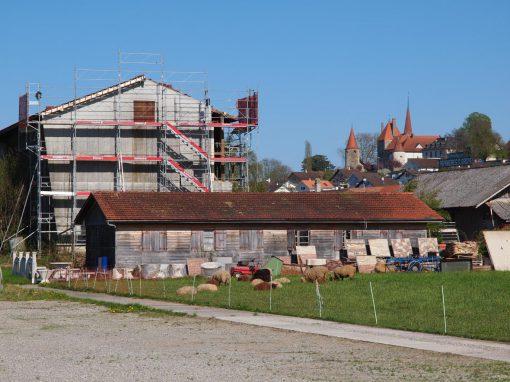Montage d'un échafaudage sur un hangar à tabac à Avenches